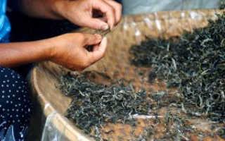 Сигареты из чая в домашних условиях