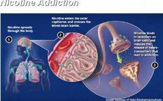 Через сколько выводится никотин