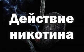 Механизм действия никотина на организм