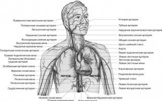 Влияние курения на кровеносную систему