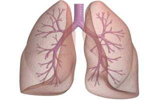 Могут ли восстановиться легкие после курения