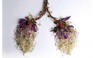 Трава для легких при курении